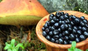 Berries and mushrooms