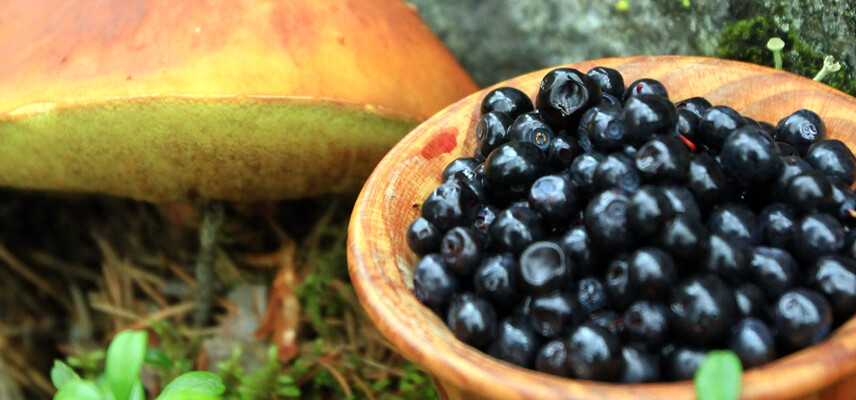 Healthy and delicious ingredients from the forest