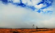 Peatbog under the mist