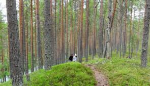 """""""Taiga"""" Forest Walk"""